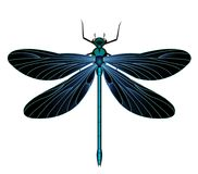 Black and blue dragonflies-dragonfly. Dragonflies are animals that look like butterflies with different postures, and I think these animals are the inspiration Stock Images