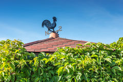 Black and blue metal weathercock on roof with green wall of wild stock image