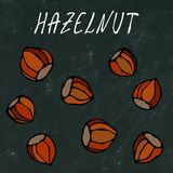 Black Board. Whole Unpeeled Hazelnuts in Shell. Healthy Snack. Autumn or Fall Harvest Collection. Realistic Hand Drawn High Qualit. Y Vector Illustration. Doodle royalty free illustration