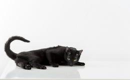 Black Bombay Cat Lying on the White Background. Stock Images
