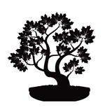 Black Bonsai Maple Tree. Illustration. Royalty Free Stock Photos