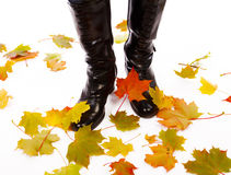 Black boots with maples on isolated white Royalty Free Stock Photography