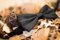 Black bow tie. On the groom neck Stock Image