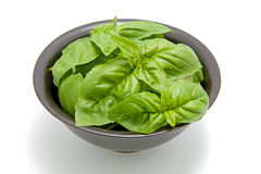 Black bowl with fresh basil leaves Stock Photography
