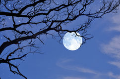 Black branches and full moon in the winter Stock Photography