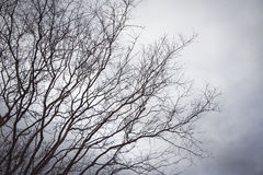 Black branches in the sky white Stock Photo