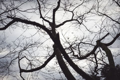 Black branches in the sky white Royalty Free Stock Photography