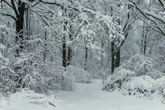 Black branches and white snow black and white winter forest. Landscape royalty free stock images
