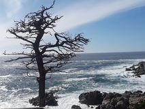 Black branching tree by the Pacific coast. Dark branched tree spreads its limbs over the swirling waters of the northern California coast royalty free stock photo
