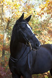 Black brandenburger Royalty Free Stock Photos