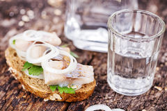 Black bread with herring and vodka Royalty Free Stock Image