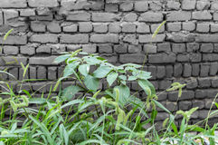 Black brick wall and grass Royalty Free Stock Photography