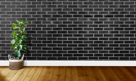 Black brick walls with wooden floors and tree with natural light For background photography stock images