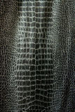 Black brilliant crocodile leather Stock Image