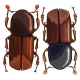 Black-brown beetle on a white background. Vector. Illustration for your design Stock Images