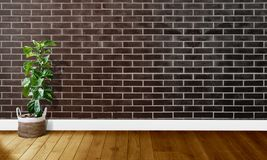 Black brown brick walls with wooden floors and tree with natural light For background photography royalty free stock photography