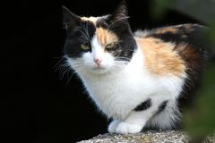 Black and brown cat. On the lookout Stock Photography