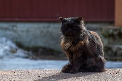 Black and brown cat and his shadow sitting on the ground, countryside spring.  Stock Images