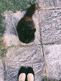 Black and Brown Cat Sitting on Ground Near Woman stock images