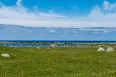 Black and brown cows grazing on a green field by the ocean. On the island Öland oute the Swedish east coast Stock Photos