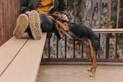 Black and brown dog lying on its owner Stock Photos