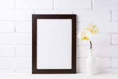Black brown  frame mockup with soft yellow orchid in vase Royalty Free Stock Images