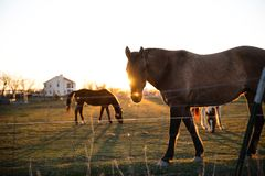 Black and Brown Horse on Green Grasses Near White House during Sunset Stock Images