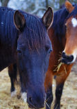 Black and Brown Horse in land Stock Images