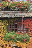 House in colorful leaves. Black and brown house in colorful leaves, green red and white flowers, orange and red maple leaves, restaurant in autumn colors royalty free stock photos