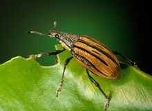 Black and Brown Insect on Green Leaf Stock Photography