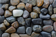 Black brown stones with one white pebbles standing out between d Stock Image