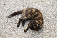 Tabby cat. Black and brown tabby cat lying on grey asphalt street and having rest stock images