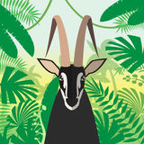 Black Buck on the Jungle Background Royalty Free Stock Photo