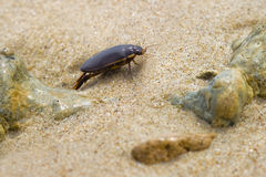 Black bug. Surrounded by sand and pebbles royalty free stock photo