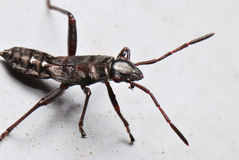 Black Bug royalty free stock photography