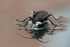 Black Bug Stock Photo