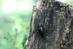 Black bug or insect Stock Image