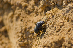 Black bug in its natural habitat. In nature stock images
