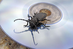 The black bug on a laser disk Royalty Free Stock Image