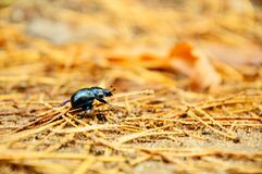 Black Bug Macro Photography Stock Photography