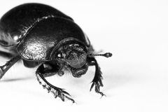 Black bug in upper left corner Royalty Free Stock Photography