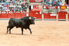 Black bull on the arena with public fund Stock Image