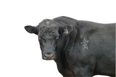 Black bull isolated on white background with path Royalty Free Stock Image