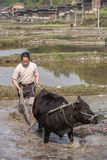 Black bull pulling a plow, Chinese farmer works in field. Royalty Free Stock Images
