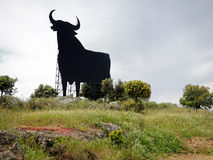 Black Bull in Spain. Huge black bull on a grassy hill among trees. Caceres, Extremadura, Spain Stock Photos