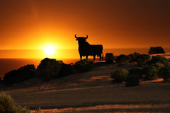 Black bull sunset Royalty Free Stock Photo