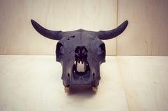 Black bulls skull Royalty Free Stock Photography