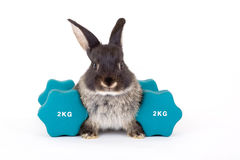 Black Bunny And A Weight Royalty Free Stock Photo