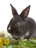 Black Bunny And Flowers Stock Photography