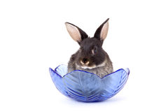 Black bunny in a glass bowl Royalty Free Stock Image